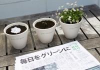 Conheça o Jornal que vira planta